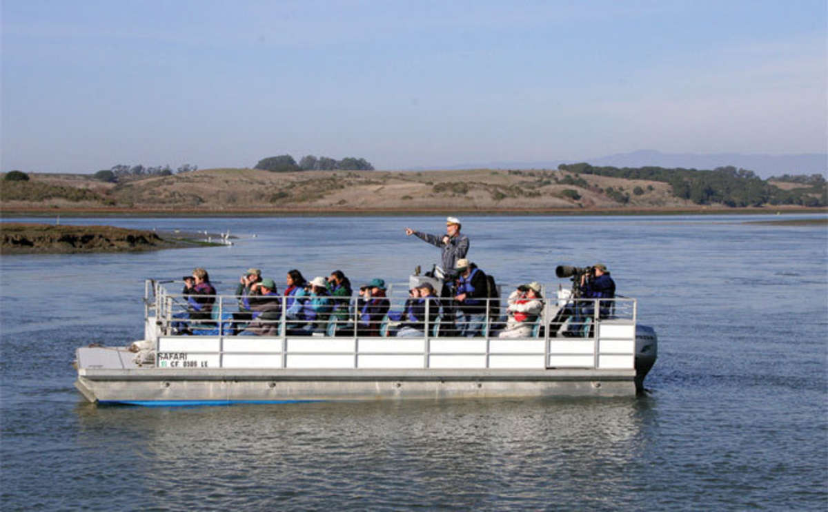 Elkhorn Slough Safari Tour, Moss Landing