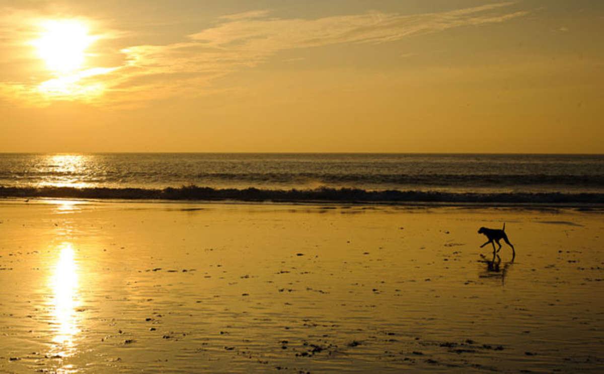 Carmel Beach, Carmel-by-the-Sea