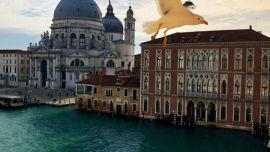 Venice, Italy (Image uploaded to Reddit by u/Roadkill80).