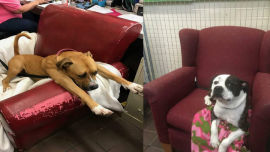 These shelter pups can now wait for new families in style.