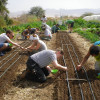 A student studying abroad with Kibbutz Lotan Center for Ecology: The Green Apprenticeship