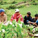 Study Abroad Reviews for MESA: -  Peru Summer Program in Global Agroecology and Local Food Systems
