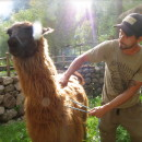 Study Abroad Reviews for Llama Pack Project: Peru - Sustainable Rural Development Internships