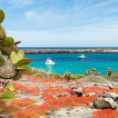 Study Abroad Reviews for AIFS: Galapagos Islands – Universidad San Francisco de Quito
