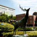Study Abroad Reviews for Sangmyung University: Seoul - Direct Enrollment & Exchange