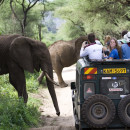 Study Abroad Reviews for The School for Field Studies / SFS: Kenya - Wildlife and Water Studies