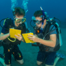 Study Abroad Reviews for Broadreach: Program at Sea - Caribbean Underwater Discoveries Voyage