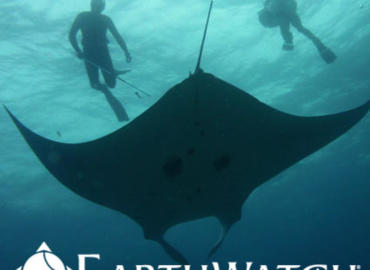 Study Abroad Reviews for Earthwatch: Australia - Project Manta