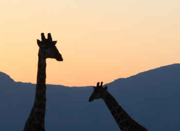 Study Abroad Reviews for UConn: South Africa - South African Ecology - Summer Program