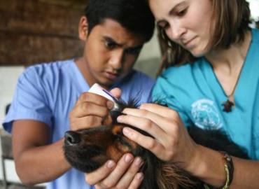 Study Abroad Reviews for Broadreach: Costa Rica - Veterinary Medicine College Summer Program