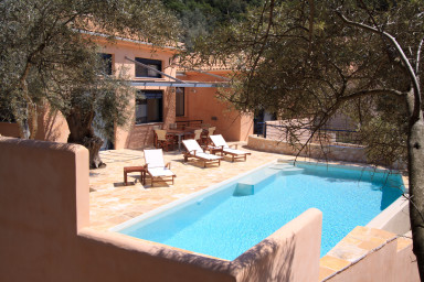 Swimming pool in between the olive trees