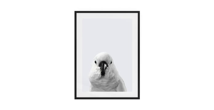 The Yellow Crested Cockatoo Print