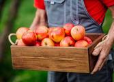 Fruit, Veg & Fresh Produce Business in Chadstone