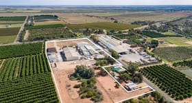 Rural / Farming commercial property sold at 24 Virgo Road Ramco Heights SA 5322