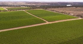 Rural / Farming commercial property sold at Glen Devlin Vineyard 13922 Goyder Highway Devlins Pound SA 5330