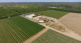 Rural / Farming commercial property for sale at 31 Safari Place Carabooda WA 6033