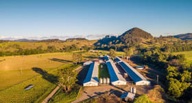 Rural / Farming commercial property for sale at 'Stroud Road Free Range Egg Farm' Stroud Road NSW 2415
