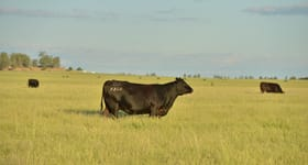 Rural / Farming commercial property for sale at 596 Moores-Bice Road Drillham QLD 4424