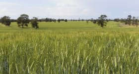 Rural / Farming commercial property for sale at 730 Pooginook Road Mabins Well NSW 2716