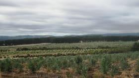 Rural / Farming commercial property for sale at 245 Deepdene Road Birregurra VIC 3242