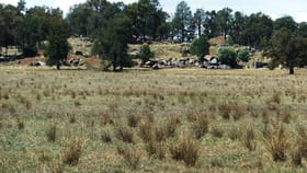 Rural / Farming commercial property sold at New Grenfell Road Forbes NSW 2871