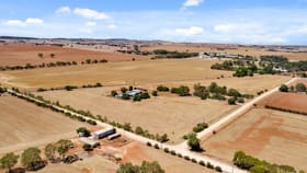 Rural / Farming commercial property for sale at 19 McAuliffes Rd Saddleworth SA 5413