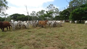 Rural / Farming commercial property for sale at 248 Hodel Road Giru QLD 4809