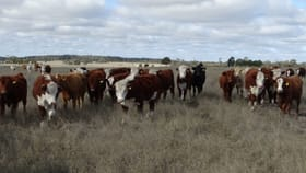 Rural / Farming commercial property sold at 312 Tumba Downs Rd Miles QLD 4415