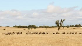 Rural / Farming commercial property for sale at Sec 76 Emu Flat Road Senior SA 5268
