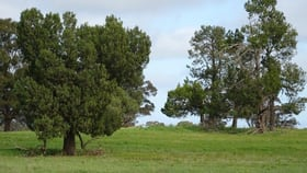 Rural / Farming commercial property for sale at ... 24 LANE Moama NSW 2731