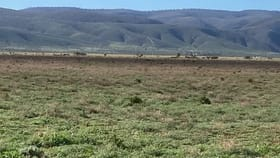 Rural / Farming commercial property for sale at 429 Middle Track & Pole Road Port Germein SA 5495