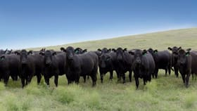Rural / Farming commercial property for sale at . 'Tumlong Aggregation', Longarm Rd Barraba NSW 2347