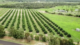Rural / Farming commercial property for sale at 171 Shanty Creek Road Mareeba QLD 4880