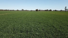 Rural / Farming commercial property for sale at 535 Aratula South Road Deniliquin NSW 2710