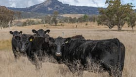 Rural / Farming commercial property for sale at 1035 Bruxner Way Tenterfield NSW 2372