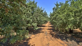 Rural / Farming commercial property for sale at 28 Gosse Avenue Loxton SA 5333