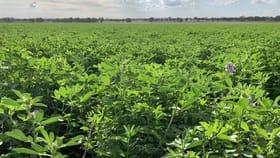 Rural / Farming commercial property for sale at 440 Walla Walla Road Walla Walla NSW 2659