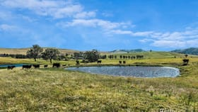 Rural / Farming commercial property sold at Bridgman Road Singleton NSW 2330