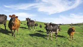 Rural / Farming commercial property for sale at 125 Charltons Road, Stony Creek VIC 3957