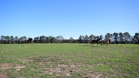 Rural / Farming commercial property for sale at Lot 1/611 Inverary Road Paddys River NSW 2577