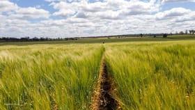 Rural / Farming commercial property for sale at 188 Roberts Road, Ellangowan Clifton QLD 4361