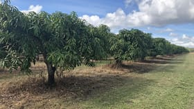 Rural / Farming commercial property for sale at Chewko QLD 4880