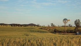 Rural / Farming commercial property for sale at 1286 Buckleboo Hundred Line Road Kimba SA 5641