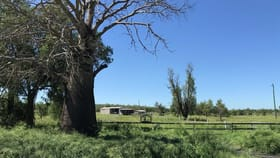 Rural / Farming commercial property for sale at 110 Mills Road Gogango QLD 4702