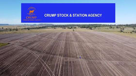 Rural / Farming commercial property for sale at Gravesend NSW 2401