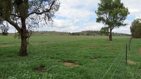 Rural / Farming commercial property for sale at 9468 Mitchell Highway Wellington NSW 2820