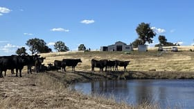 Rural / Farming commercial property for sale at 105 Cuddyong Road Binda NSW 2583