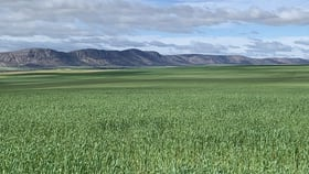 Rural / Farming commercial property for sale at 783 O'Connor Road Darke Peak SA 5642