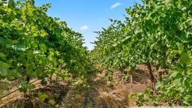 Rural / Farming commercial property for sale at 543 Aldinga Road Aldinga SA 5173
