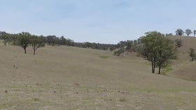 Rural / Farming commercial property for sale at Kohinui Park Oaklands Rd Yarrowitch NSW 2354